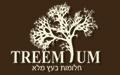 Treemium - כסאות עץ
